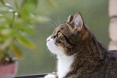 Cat  sitting on the window Royalty Free Stock Photography