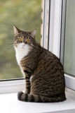 Cat  sitting on the window Royalty Free Stock Photos