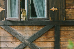 Cat sitting in the window of a wooden house Stock Photography