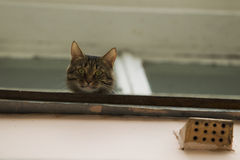 A cat sitting on the windowsill. Royalty Free Stock Images