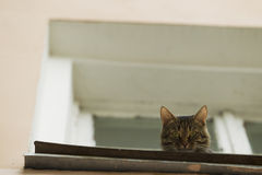 A cat sitting on the windowsill. Stock Images