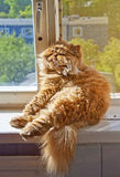 Cat sitting on the windowsill Stock Image