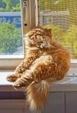 Cat sitting on the windowsill Stock Image