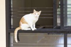 Cat sitting on the windowsill Royalty Free Stock Photography