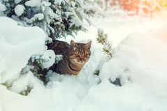 Cat sitting in the winter forest Stock Image