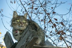 Cat sitting on wooden boards in the autumn royalty free stock images
