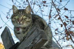 Cat sitting on wooden boards in the autumn royalty free stock image