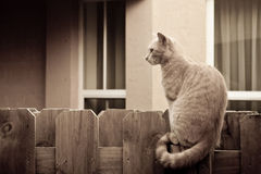 Cat on the fence Stock Image