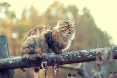 Cat sitting on a wooden fence Stock Photos
