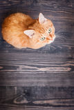 Cat sitting on the wooden floor Stock Photos