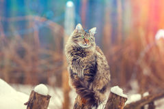 Cat sitting on a wooden post Royalty Free Stock Photography