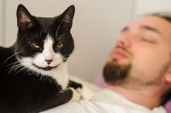 Cat sitting on young man Royalty Free Stock Photography
