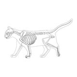 Cat skeleton veterinary vector illustration Royalty Free Stock Photography