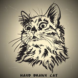Cat sketch drawing on brown background Stock Photos