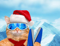 Cat skier in red Christmas hat. Royalty Free Stock Image