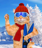 Cat with skis. Stock Photo