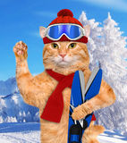 Cat with skis. Stock Images