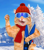 Cat with skis. Royalty Free Stock Image