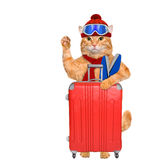 Cat with skis with a suitcase. Stock Photos