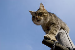 Cat in the sky Royalty Free Stock Photos