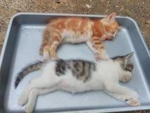 Cat Sleep Imagen de archivo libre de regalías