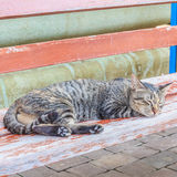 Cat Sleep Imagem de Stock