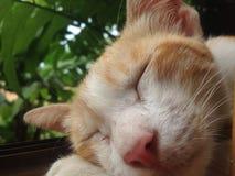 Cat Sleep Immagine Stock Libera da Diritti