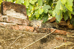 Cat Sleep Royalty-vrije Stock Foto