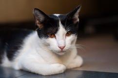 Cat Sleep Fotografía de archivo