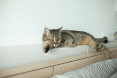 Cat Sleep stockbild