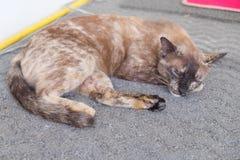 Cat Sleep Immagini Stock Libere da Diritti