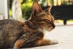 Cat sleep royalty free stock photo