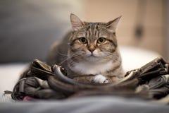 Cat sleep bag instinct animal lovely pet. Habit stock images