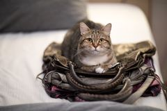 Cat sleep bag instinct animal lovely pet. Habit royalty free stock photos