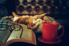 Cat sleep with book eyeglasses and coffee cup Stock Photos