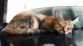 Cat sleep. Ing on the car Stock Image