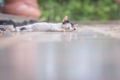Cat sleep Stock Photo