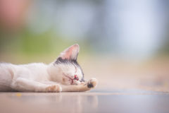 Cat sleep Stock Image