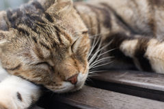 Cat sleep on a chair. Tabby cat lying on a chair to sleep in the cat village of Houtong, Taiwan Royalty Free Stock Photo