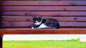 Cat sleep. The colorful cat is sleeping on the bench royalty free stock photography