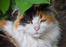 Cat sleep green bush royalty free stock photo