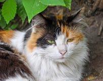 Cat sleep green bush royalty free stock image