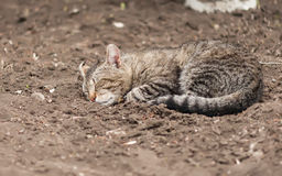 Cat sleep on the ground Stock Image