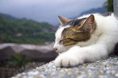 Cat. A Sleep cat in Houtong Kitty village, Taiwan Royalty Free Stock Images