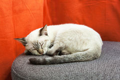 A cat sleep on modern grey sofa. With orange background Stock Photos