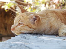 Cat sleep outdoor. On the cement wall Royalty Free Stock Photos