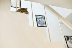 Cat sleep Royalty Free Stock Images