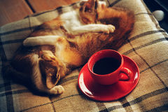 Cat sleep on pillow and coffee cup Stock Image