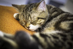 Cat sleep on an pillow. Cat sleep on orange pillow Stock Photo