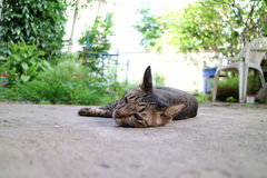 Cat sleep Stock Photos